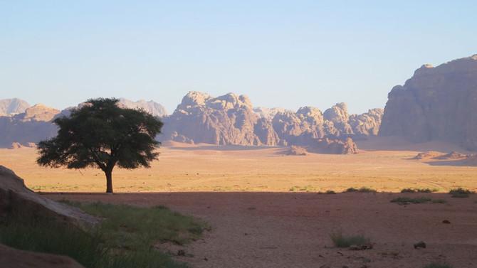 Verdir le désert et créer de la vie