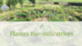 PLANTES_BIOINDICATRICES.png