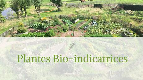 PLANTES_BIOINDICATRICES.png