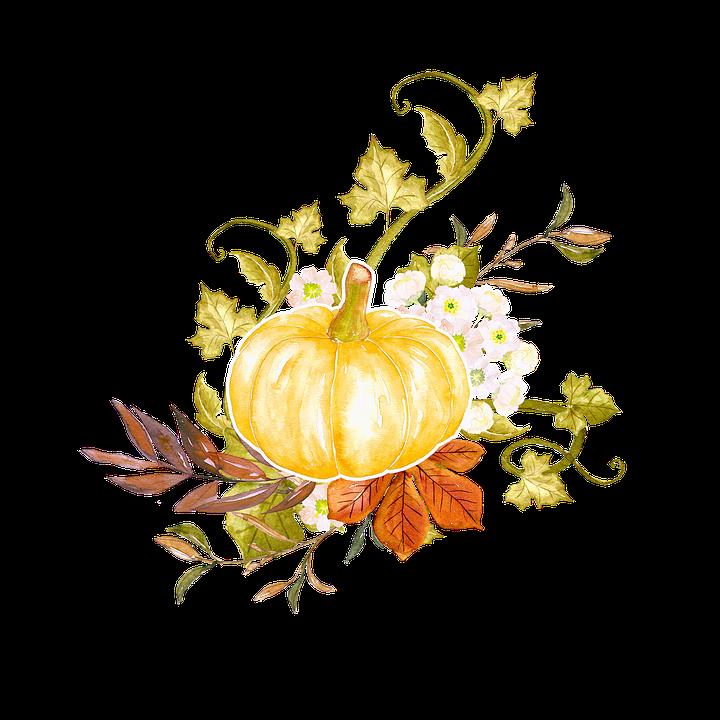 pumpkin leaves and vines
