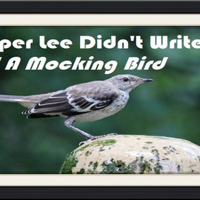 Harper Lee Didn't Write To Kill A Mocking Bird – Op-Ed Piece
