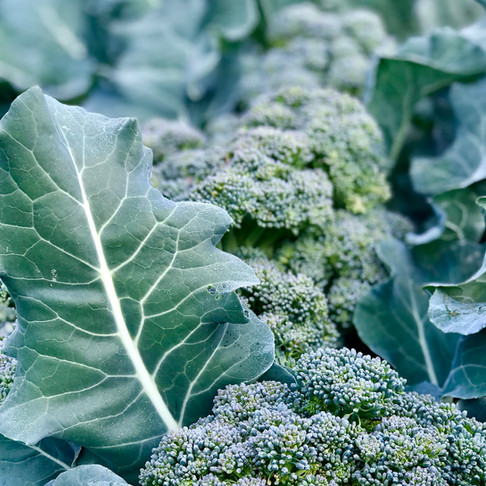 4 Reasons You Should be Eating Broccoli Leaves & How to Use Them