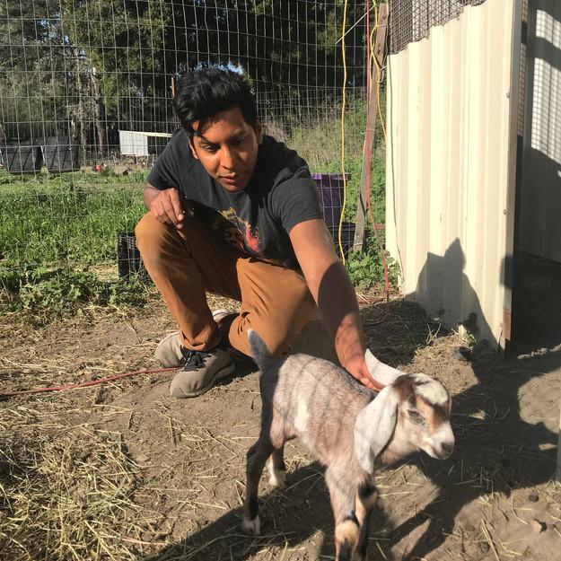 Mau being Papa to baby goats