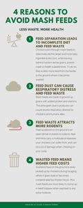 4 Reasons to Avoid Mash Chicken Feeds | Dare 2 Dream Farms - Know it