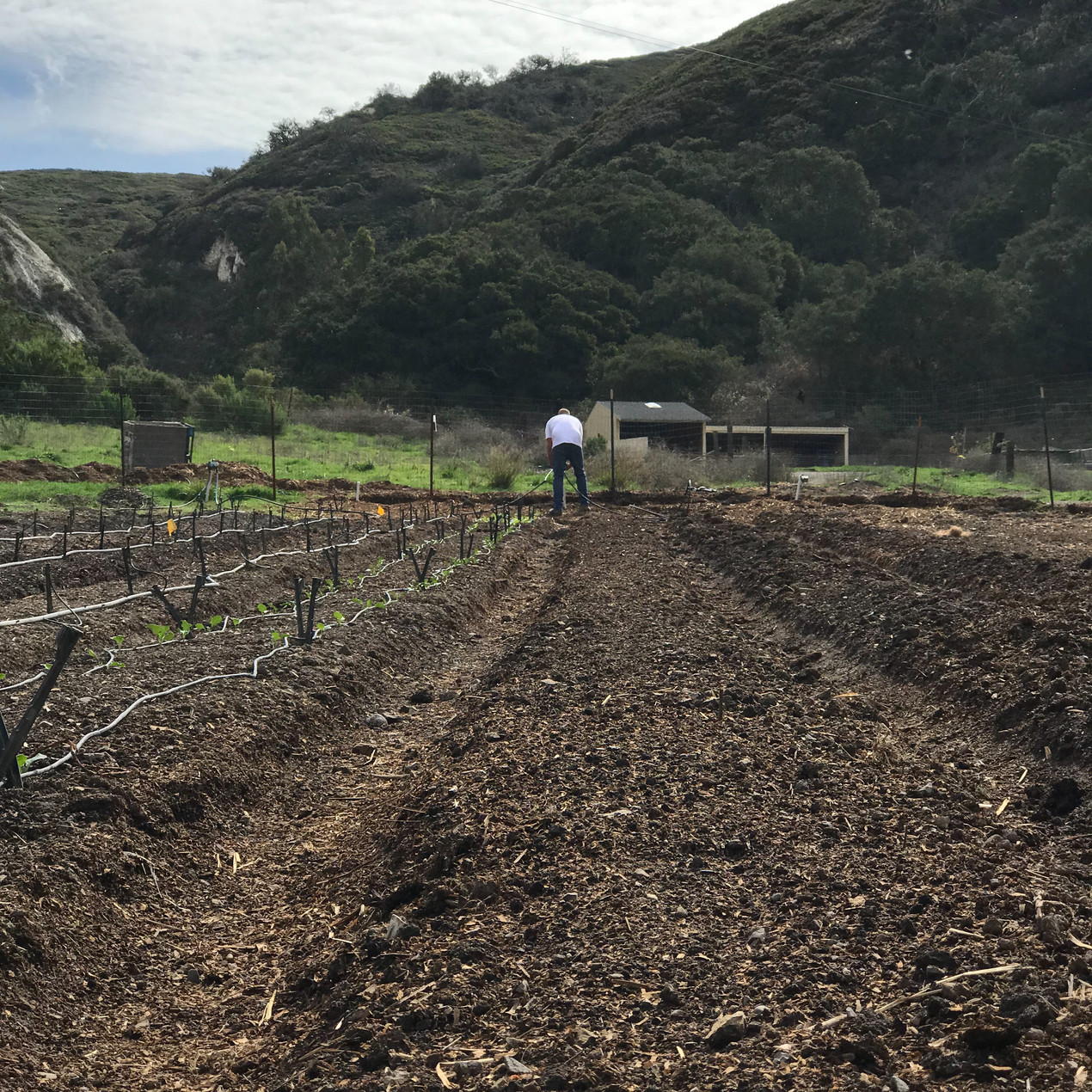 Forming beds with irrigation, crop starts, and compost