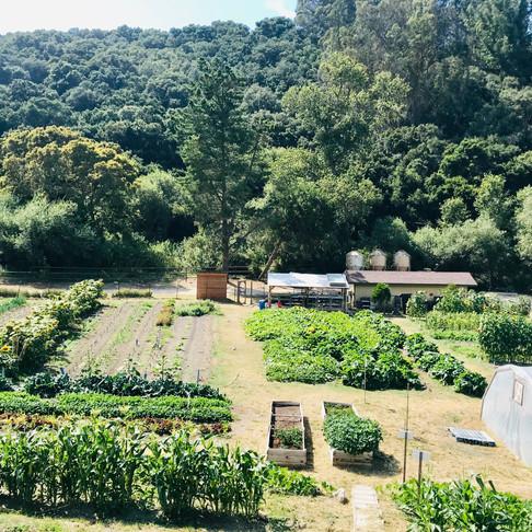 A Day at Dare 2 Dream Farms, by Explore Lompoc