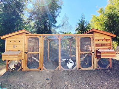 Two 3'x5' Weathertop Coops