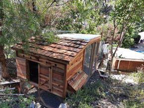 4'x6' Weathertop Coop with Covered Run