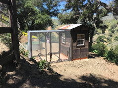 Rustic Lodge with 6'x8' Run and Corrugated Roof