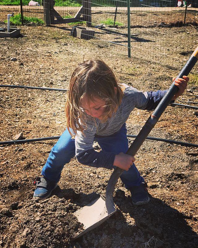 Wyatt digging deep with the shovel