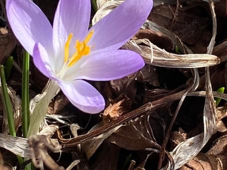 Frühling - erste Zeichen! FREUDE!
