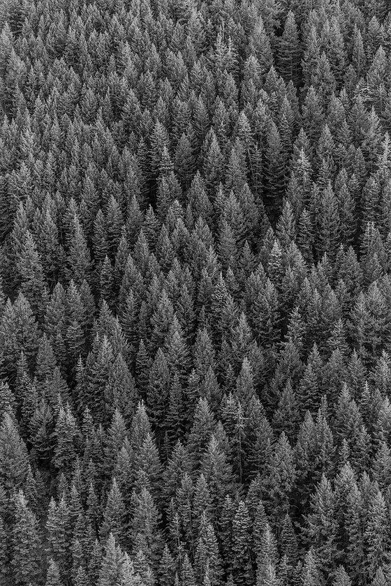 color-conifer-daylight-1179229_edited_edited.jpg