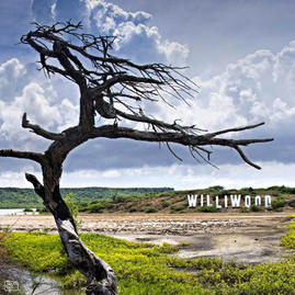 Landmark project 'Williwood'