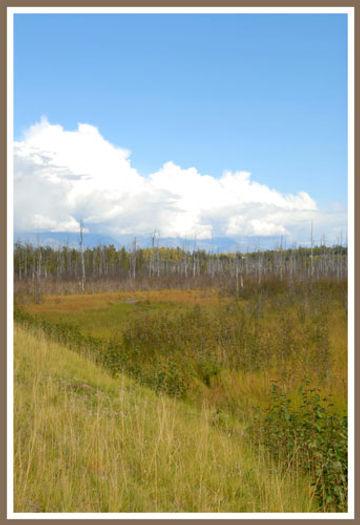 'ghost forest' near Palmer