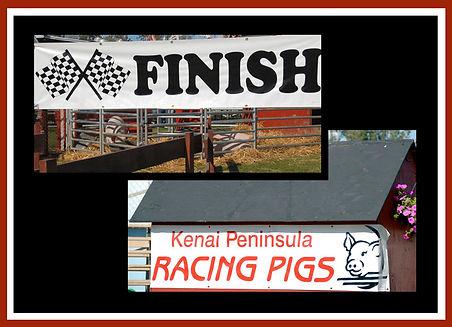 pig race finish line