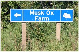 musk ox farm sign