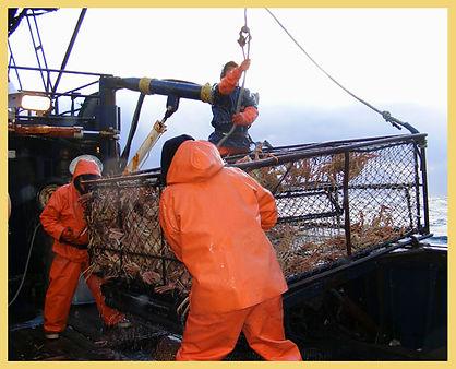 crab fishermen hauling in crab pot
