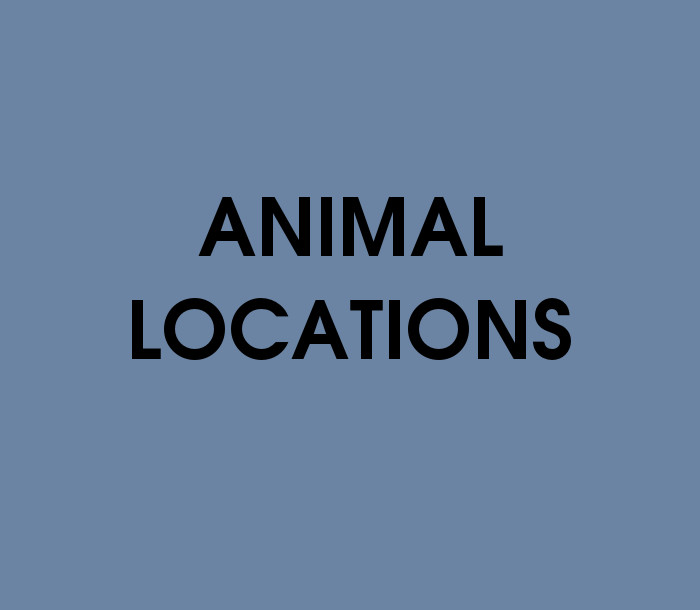 Animal Locations Quiz