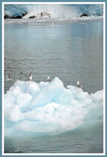 seagulls on glacier ice