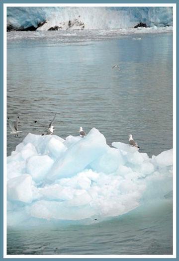 seagulls on glacier ice
