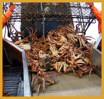 alaska king crab pot