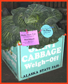award winning cabbage
