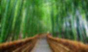 bamboo_page.jpg