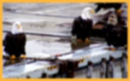 bald eagles on a dock