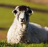 wool_square