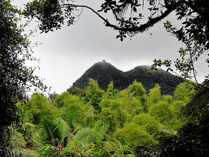 El Yunque National Forest – trilhas com cachoeira!