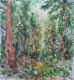 Воронкова Е.А. В лесу