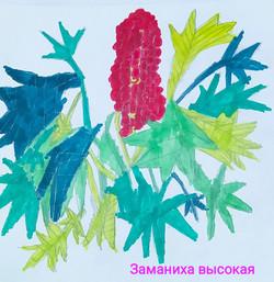 Меркулова Вероника, 8 лет