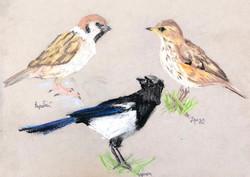 Бойчевская Арина Зарисовки пастелью птиц
