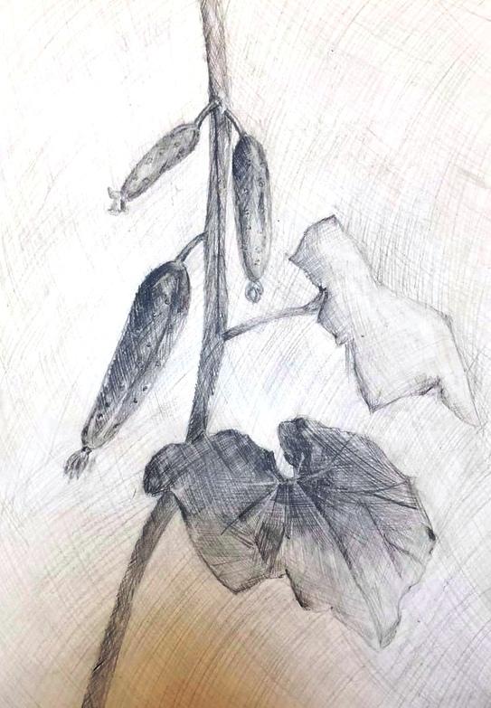 Бойчевская Арина Зарисовка растительной