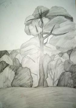 Ильиных Илона 12 лет Дерево