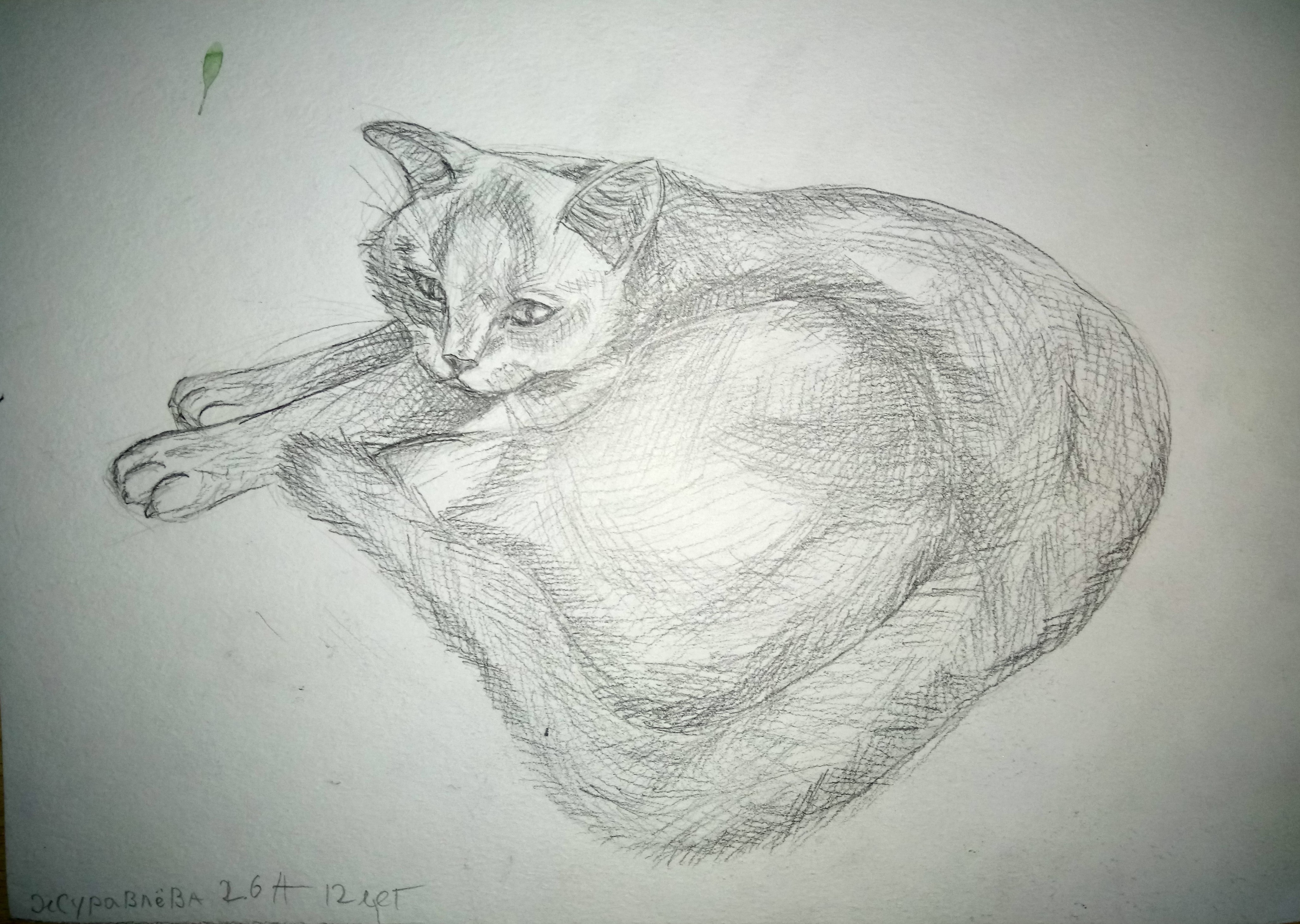 Журавлёва Юлия 12 лет Моя кошка