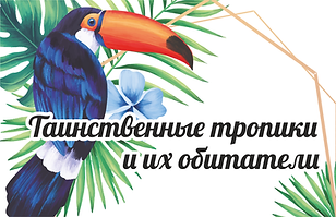 205 ьанер.png