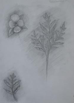 Черноногова Мария 11 лет