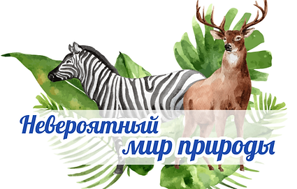 Мир природы афиша-min.png