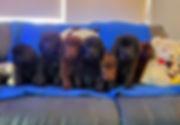 Ellie Mae's puppies!.jpg