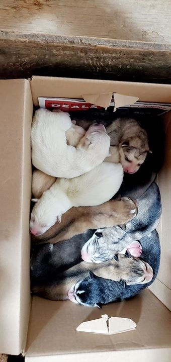 A box full of puppies!!❤❤❤❤❤.jpg