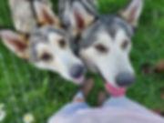 Seneca & Diana my NAID's.jpg
