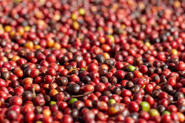 fresh-arabica-red-coffee-beans-berries-d