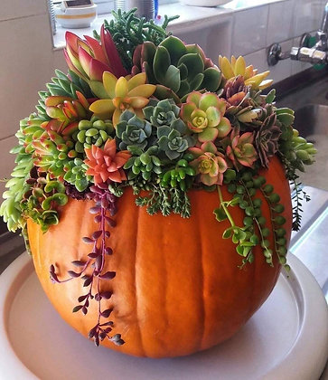 Thanksgiving Pumpkin Arrangement 11/15