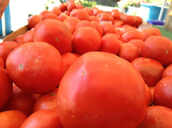 Tomatoes Fresh from The Field
