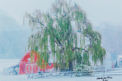 """""""SNOW AND THE WILLOW"""""""