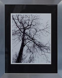 GIANT B & W TREE