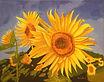 20Sunflowers.jpg