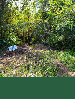 organic palm oil with zero deforestation