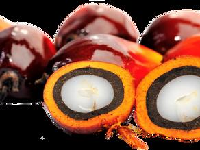 Consumers should not boycott Palm Oil